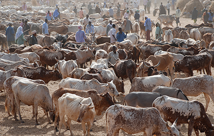 In dry areas, pastoralism is often the most economic use of land © USAID/Mariantonietta Peru