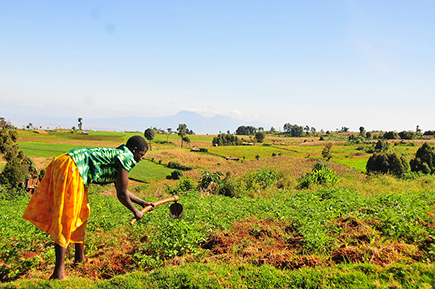 Working the land in Kapchorwa district, Uganda © FAO / Matthias Mugisha